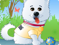 Puff the american eskimo